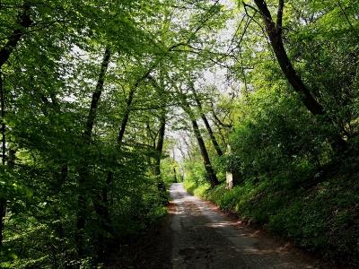 Luleč - Křížová cesta ke sv. Martinovi_8